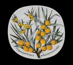 Esteri Tomula Hippophaes Rhamnoides 80s Botanical Wall Plate Arabia Finland