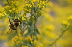 Wildlife-friendly Gardening: Provide Food / Wild About Gardening (Canadian Wildlife Federation) Canadian Wildlife, Types Of Plants, Gardening Tips, Habitats, Bee, Nature, Animals, Animales, Animaux