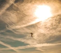 Cloud Sky Clouds, Sky, Celestial, Photography, Painting, Outdoor, Heaven, Outdoors, Photograph