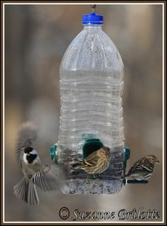 1000 images about wood hummingbird houses on pinterest for Hummingbird house plans