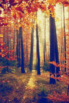 Landscape Trees Nature Forest Autumn Leaves