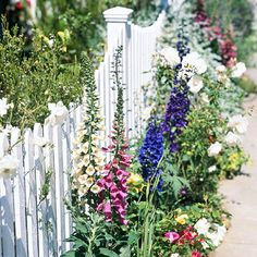 For in front of our fence? Wildflowers are beautiful but not fussy.