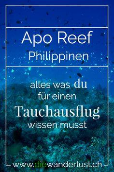 Wolltest du schon immer am Apo Reef in Sablayang auf den Philippinen tauchen? Es wir gesagt, es sei der schönste Tauchspot auf den ganzen Philippinen. Delfine und Haie sind bei dem Ausflug keine Seltenheit. #aporeef #philippinen #sablayan #schönstertauchspot #tauchen #delfine #haie Bohol, Palawan, Cebu, Beste Hotels, Diving, Travel, Wanderlust, Diving School, Morning Light