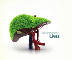 Mims Hospital Kerala, India offer liver transplantation in kerala for an affordable price.