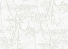 Cow Parsley (95/9052) - Cole  Son Wallpapers - A large scale all over design of cow-parsley, in pale grey on soft off white background – giving a magical delicate effect.  Available in other colours. Please ask for a sample for a true colour match. Paste-the-wall product.