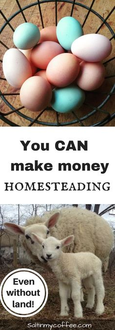 There are so many ways to make money homesteading - and many don't require much land, or any at all! Here are 52 money-making homestead enterprises to kick-start your brainstorm list!!
