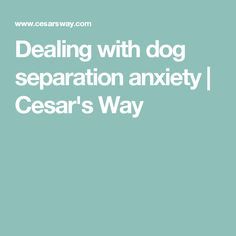 Dealing with dog separation anxiety | Cesar's Way