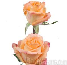 Queensday - Peach/ Orange Rose