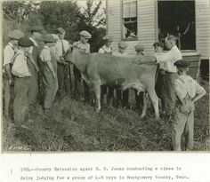 UT Agriculture class in Dairy Judging (circa 1924)