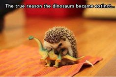 Funniest_Memes_the-true-reason-the-dinosaurs-became-extinct_13201.jpeg (450×300)