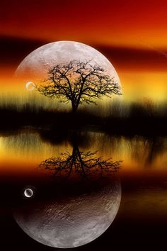 ⭐Tree, Lake, & Moon Reflection⭐
