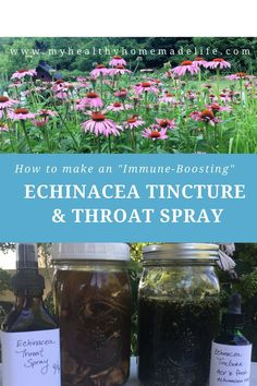 Homemade Echinacea Tincture and Throat Spray DIY Medicine Herbal Medicine Herbs Home Remedies Cold Home Remedies, Natural Health Remedies, Herbal Remedies, Flu Remedies, Healing Herbs, Medicinal Herbs, Natural Healing, Natural Life, Natural Beauty