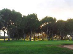 Wood under sunset