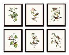 """Audubon Birds Print Set No.1 Set of 6 Vintage Bird Prints Home Decor Wall Art - Unframed. This print set features 6 vintage bird illustrations by the renowned naturalist John James Audubon. The images have been digitally restored, enhanced and added to a light neutral background. • Free Shipping • Money Back Guarantee • Sizes Available: 5x7, 8x10, 11x14 • Trimmed to size for easy framing. • Sized to fit """"off the shelf"""" standard retail frames & mats. • Printed on Professional Archival…"""