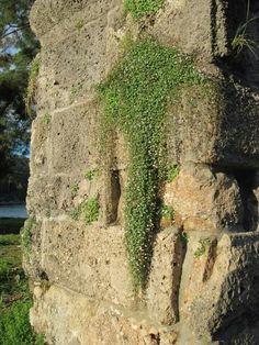 Life from the ruins in Phaselis. Kemer, Antalya, Turkey Ancient Roman ruins