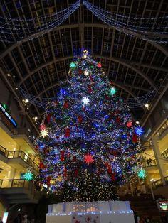 Christmas Around the World | Christmas australia, Australia and Beach