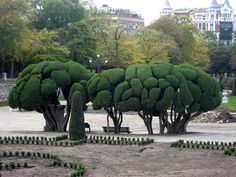 Cool trees. Retiro Park. Madrid.