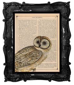 sweet li'l owl  [previous pinner's caption, slightly modified]