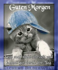Good Morning Funny Sayings # GutenMorgenWitzigeSprüche … Good Morning Funny, Morning Humor, Bisous Gif, Animals And Pets, Cute Animals, Pub Vintage, Good Vibe, Montage Photo, My Prayer