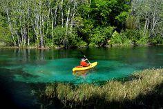 Rainbow River Florida, Ocala Florida, Arcadia Florida.