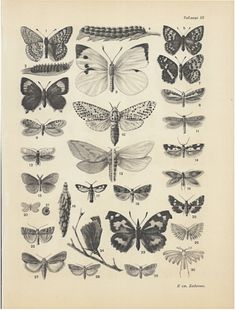 Vintage Insects Print Butterflies Art Poster Black and White Original Russian Authentic Print Illustration Poster for frames