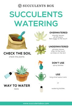 Infographic: Types of Succulents - Ideas of Succulents Plants Succulent Care, Succulent Gardening, Planting Succulents, Garden Plants, Planting Flowers, Watering Succulents, Indoor Succulents, Succulent Containers, Growing Succulents