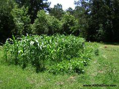 First Steps To Backyard Farming -