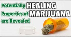 """Medical marijuana or cannabis has been legal for 18 years, yet it has become a plant that gets you """"high,"""" ignoring its medicinal properties and uses. http://articles.mercola.com/sites/articles/archive/2014/03/09/medical-cannabis.aspx"""