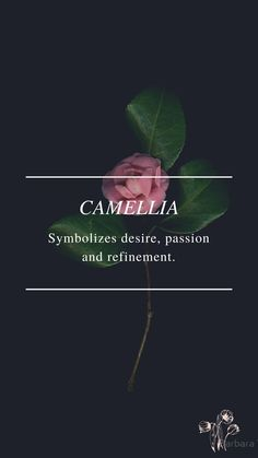 Flower Symbol, Camellia, Passion, Love, Flowers, Movie Posters, Amor, Film Poster, Royal Icing Flowers