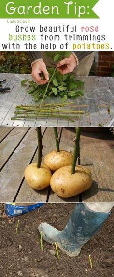 Clever Gartenarbeit-Spitze durch Novias & Co.