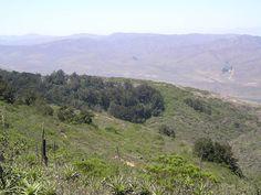 Parque Nacional Fray Jorge es un parque nacional chileno, ubicado en la Provincia de Limarí de la Región de Coquimbo, cerca de la ciudad de Ovalle.