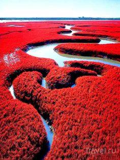 Conheça a incrível praia vermelha na China.
