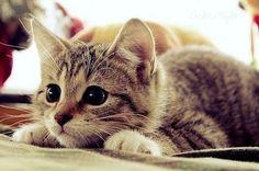 Big eyes :o)
