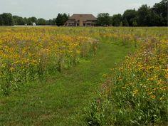 Vineyard, Wildlife, Natural, Plants, Outdoor, Outdoors, Vine Yard, Vineyard Vines, Plant