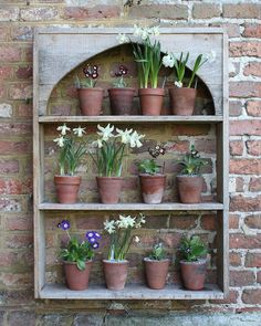 Today I learnt I need an auricula theatre but not for auriculas Small Courtyard Gardens, Small Gardens, Modern Gardens, Gravel Garden, Garden Pots, Plant Theatre, Sissinghurst Garden, Brick Wall Gardens, Primula Auricula