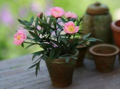 A Beautiful World - Blogger says:  A few years ago I copied one of the flowering peonies in my garden in miniature.  This peony is a single flowering variety in a bright pink colour with a soft yellow center, really striking!