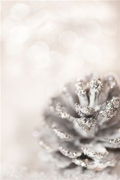 frosted pinecone ❥