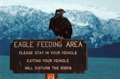 Homer, Alaska