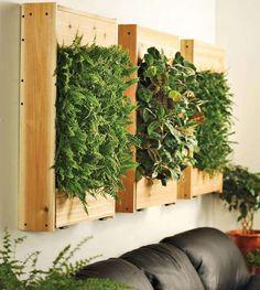 Un jardín vertical en el interior de tu hogar
