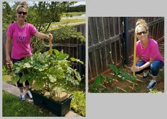 """Congratulations Stacy!  The 3rd WEEKLY WINNER of our 2017 PHOTO CONTEST!  As a science teacher, I wanted to explore the idea of growing okra in """"red clay"""" soil versus the grow box. Just by looking at the yard stick, one can observe that the okra in the grow box is at least 3 times as tall as the okra in red clay. I have three grow boxes, one with okra, one with watermelon, and one with cucumbers and tomatoes and all are doing fabulous in the Oklahoma heat."""