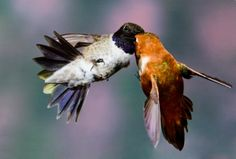 animals kissing   cute birds flying