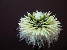australia wildflowers | HD *** Wild flowers ***