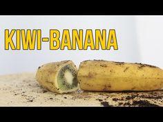 Cómo hacer crecer un kiwi dentro de una banana - BANIWI - YouTube