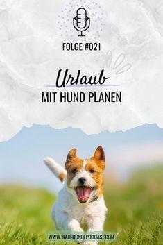 Hallo und herzlich Willkommen bei WAU – dem österreichischen Hunde-Podcast. Wir sind Laura und Kerstin und in der heutigen Podcast-Folge sprechen wir über das spannende Thema: Wie plane ich meinen Urlaub mit Hund? Hund │Hunde Corgi, Animals, Companion Dog, Dog Care, Corgis, Animales, Animaux, Animal, Animais