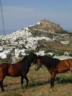 ΣΚΥΡΟΣ Zorba The Greek, Greece Islands, Horse Breeds, Greece Travel, Sailing, Beautiful Places, Horses, Animals, Beaches