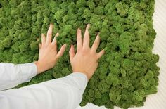 Moss Panels