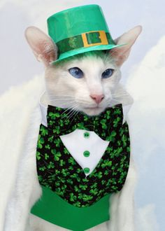Happy St Patrick's Day from The Cat's Meow | Catster