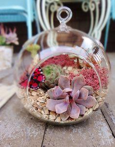 Sunshine & Succulents | Succulent terrariums, tiny gardens, … | Flickr