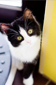 12 Times Pets Tried To Unlock Their Owners Phone And Failed Miserably Whiskers On Kittens, Cute Cats And Kittens, Cool Cats, Kittens Cutest, Pretty Cats, Beautiful Cats, Crazy Cat Lady, Crazy Cats, Tier Fotos