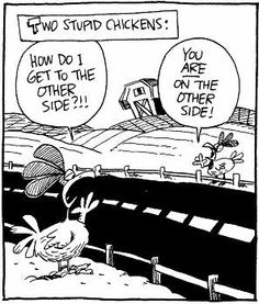 Two Stupid Chickens Jokes, humor, fun pages, funny pictures, free cartoons Funny Chicken Pictures, Funny Cartoon Pictures, Funny Photos, Funny Images, Bing Images, Chicken Jokes, Clean Funny Jokes, Funny Stuff, Clean Funnies